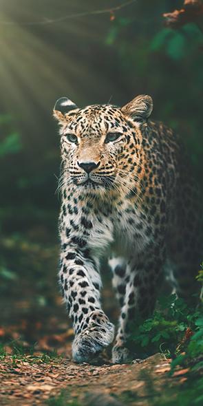 Leopard Badehåndklæde – 100 procent bomuld